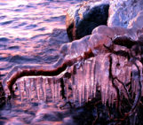 Imaggeo On Monday: Ice-coated roots at sunset