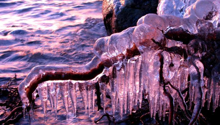 Imaggeo On Monday: Ice-coated roots at sunset