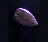 Imaggeo On Monday: Studying shell morphodynamics to improve climate models