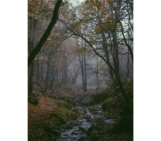 Imaggeo On Monday: The Virgin Forest of Arasbârân