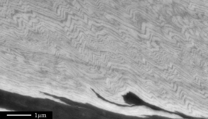 Imaggeo on Mondays: A fold belt within a grain