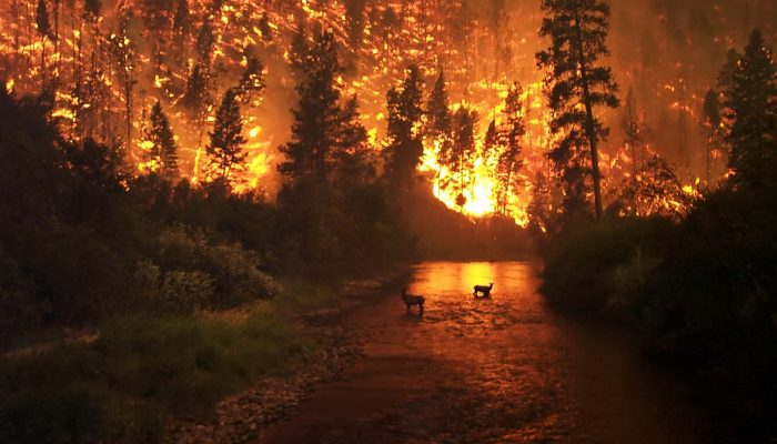 GeoSciences Column: Is smoke on your mind? Using social media to assess smoke exposure from wildfires