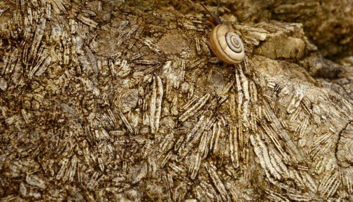 Imaggeo on Mondays: Nummulites, the living lentils