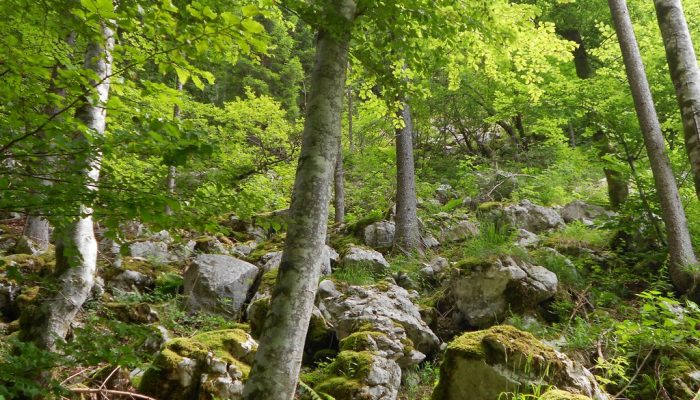 GeoPolicy: How science supported the EU's new land use and forestry regulation
