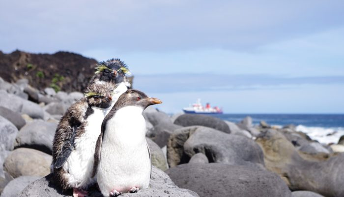 Imaggeo on Mondays: On the way to Tristan's penguins