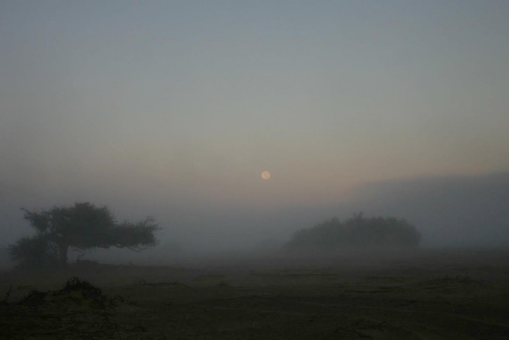 A foggy morning in the Huab River Valley (Credit: J.King)