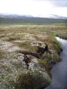 Permafrost peatbog border in Storflaket, Abisko, Sweden. Source - Dentren, Wikimedia Commons.