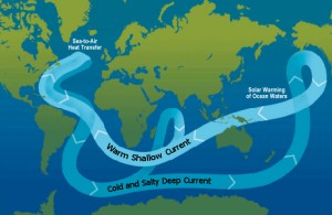The global circulation of the oceans, known as the 'conveyor belt' - Source: Thomas Splettstoesser, Wikimedia Commons.