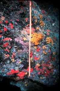 Demosponges and coralline algae - Photograph: K. Rasmussen, Wikimedia Commons.