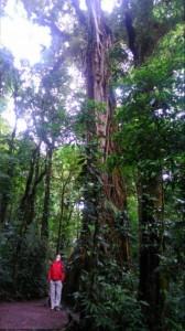People often tell me I'm tall... Monteverde National Park, Costa Rica