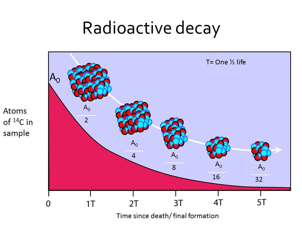 Atom used in radiocarbon dating