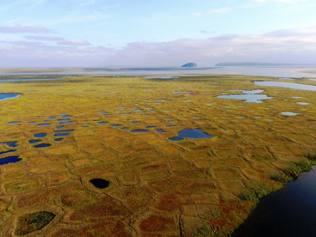 Wet Sedge Polygons on Samoylov Island with Stolb Island in the background - Samoylov Island - Lena River Delta - 20.08.2010 - Sebastian Zubrzycki