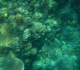 Weighing up the pros and cons of artificial coral reefs