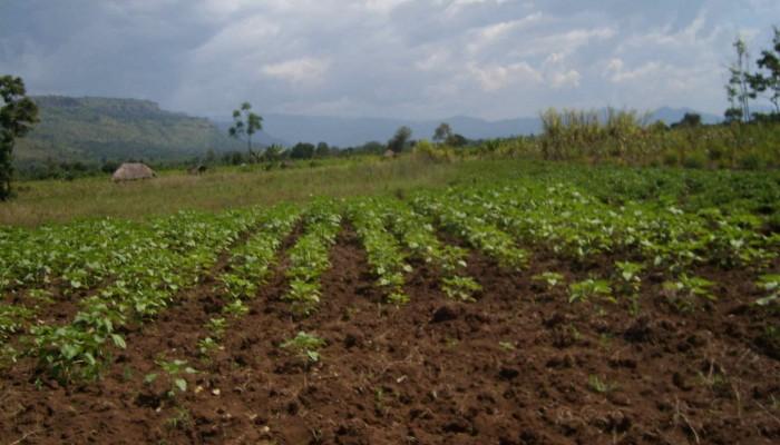 Robert Emberson: Soil Erosion and Sustainable Development