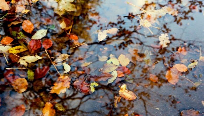 Guest Blog: Autumn Reflections