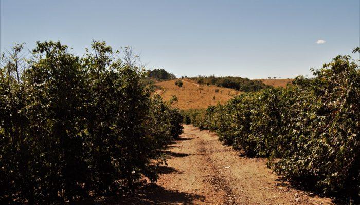 Bárbara Zambelli Azevedo: Phosphorus Crisis – A Food Crisis?