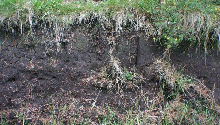 Peat in the Tropics