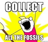 Can fossil mammals help us with our conservation efforts?