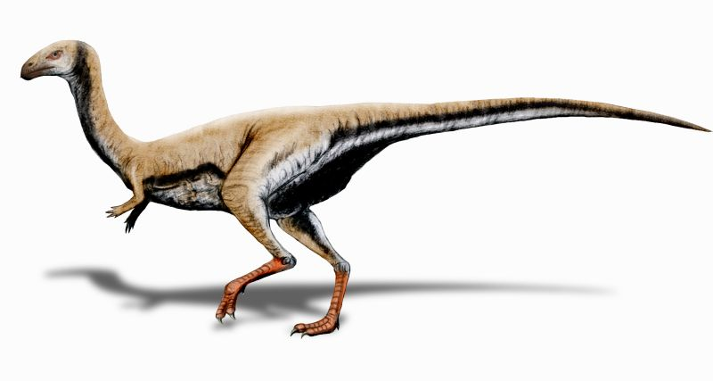 Limusaurus reconstruction (source)
