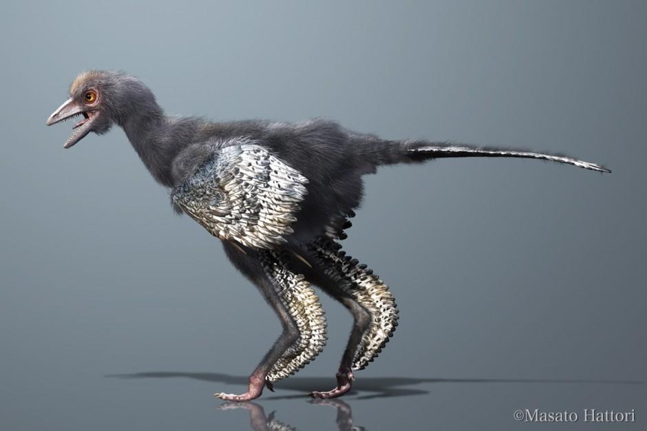Reconstruction of Aurornis xui Credit: Masato Hattori (source)