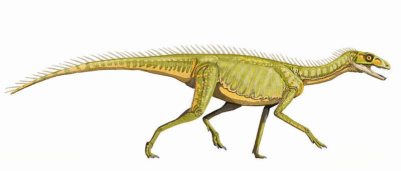 Life restoration of Silesaurus (source). CC-BY SA 3.0