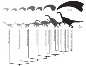 Diversity in therizinosaur claws! (source)