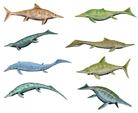 Ichthyosaurs were quite diverse beasities! (Source, by Nobu Tamura)