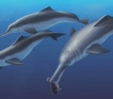 New species of 'river dolphin' reveals their ancient marine origins