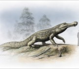 Crocodiles feeling the heat of extinction