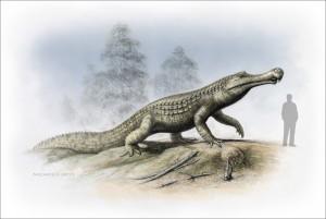Sarcosuchus 2A (c)Nicholls2015 (2)