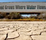 Is groundwater depletion keeping California fruit and veggies cheap during the severe drought?